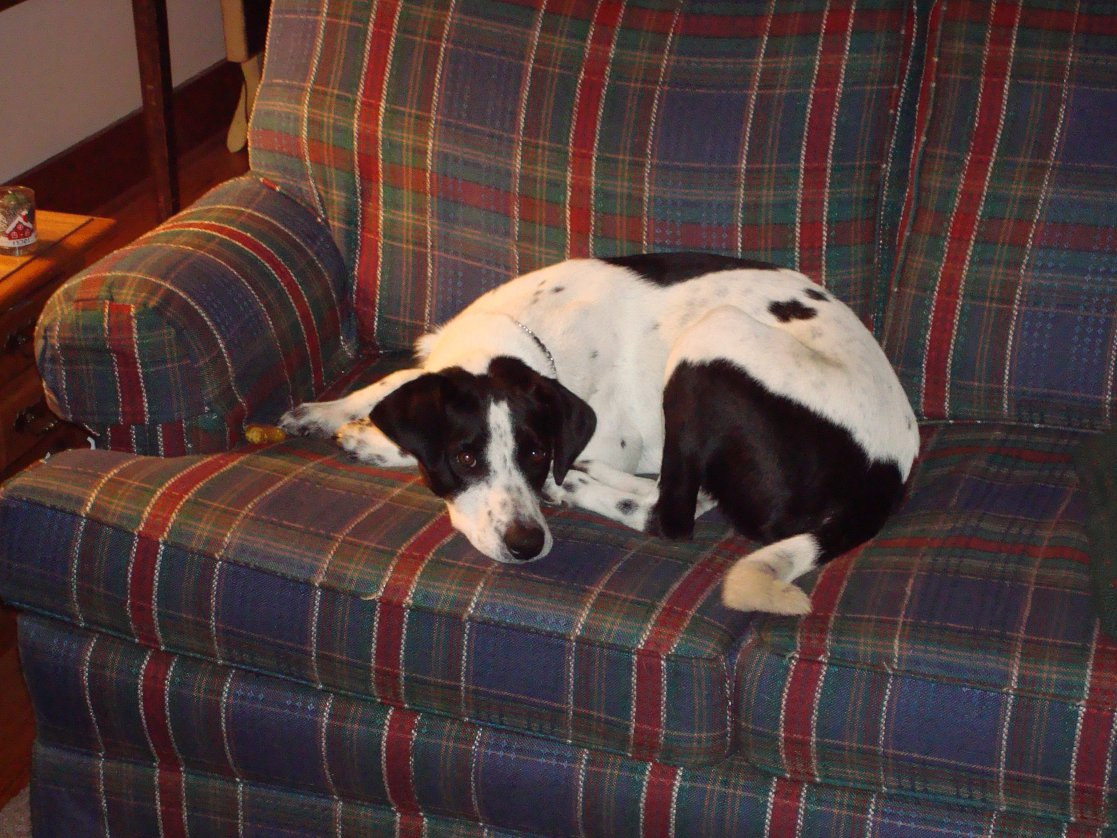 Beagle/Pointer mix?? We have no idea-020.jpg