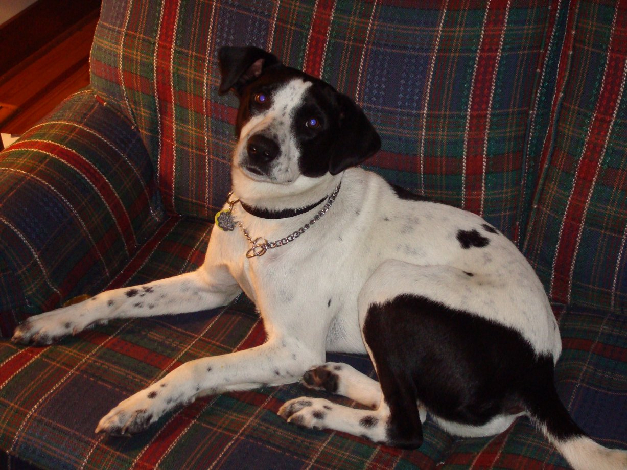 Beagle/Pointer mix?? We have no idea-021.jpg