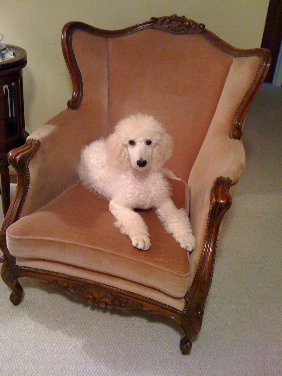 The White Poodle Thread-086.jpg