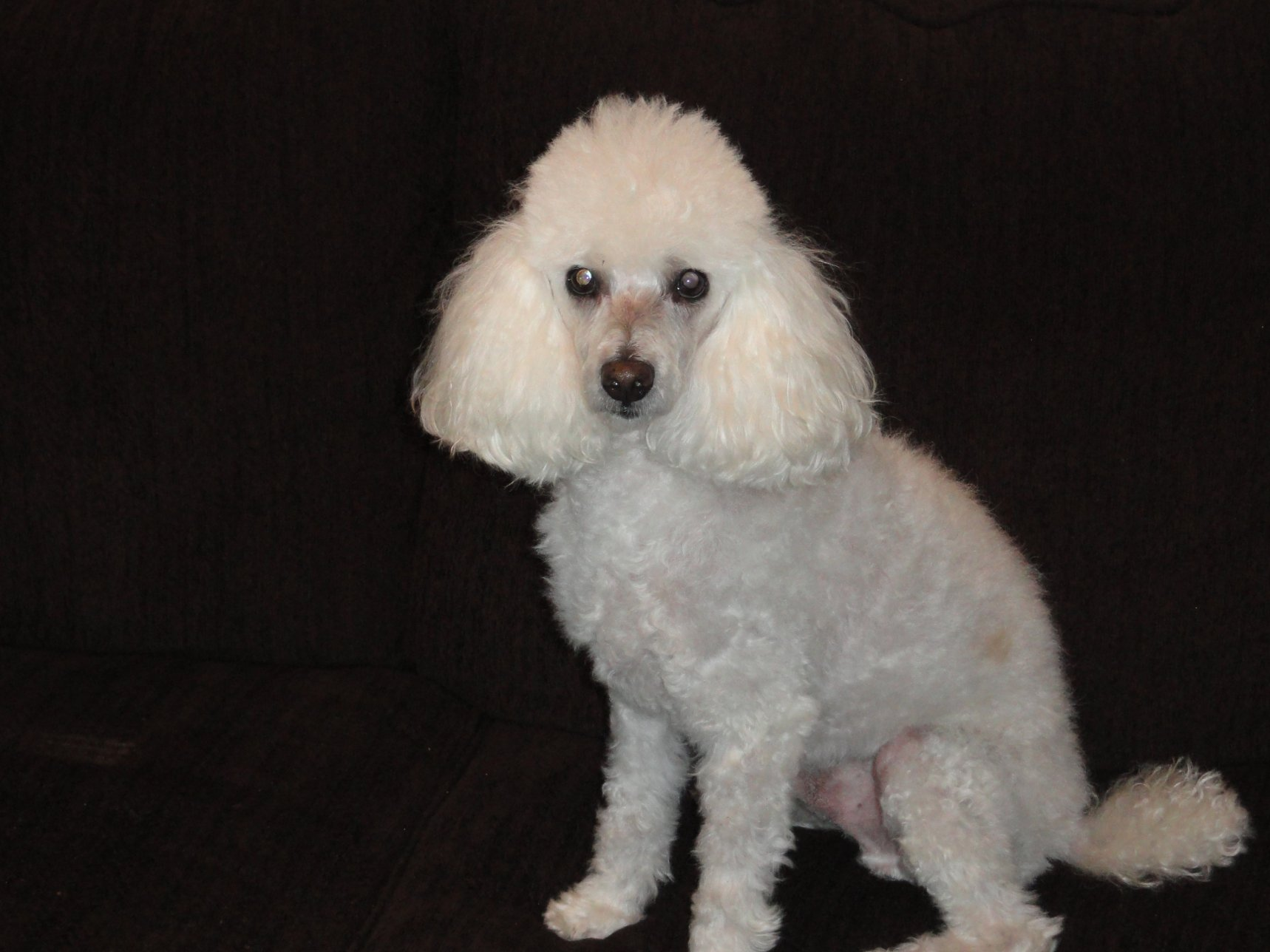 The White Poodle Thread-10-01-3-.jpg