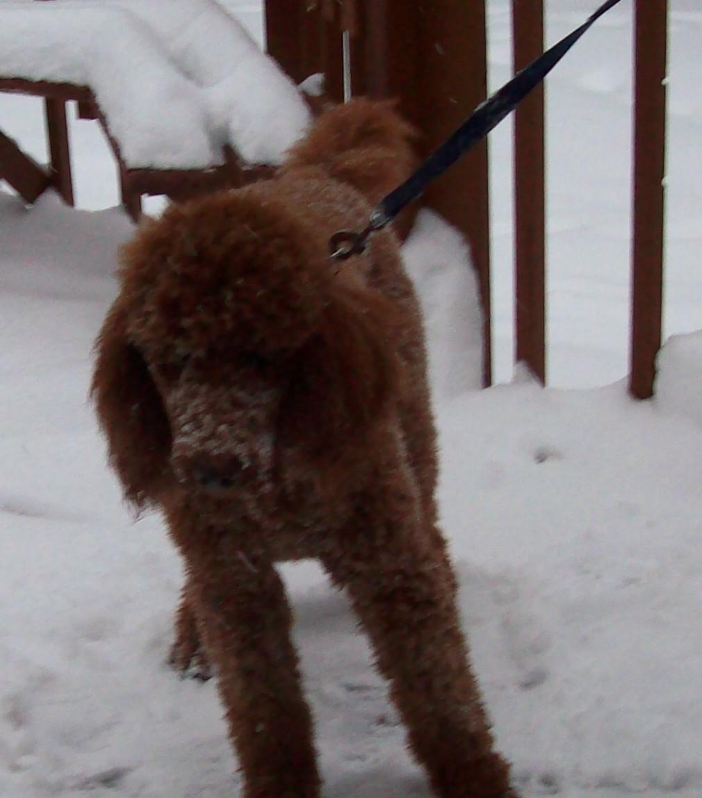 Furry Poodles-100_3589a.jpg