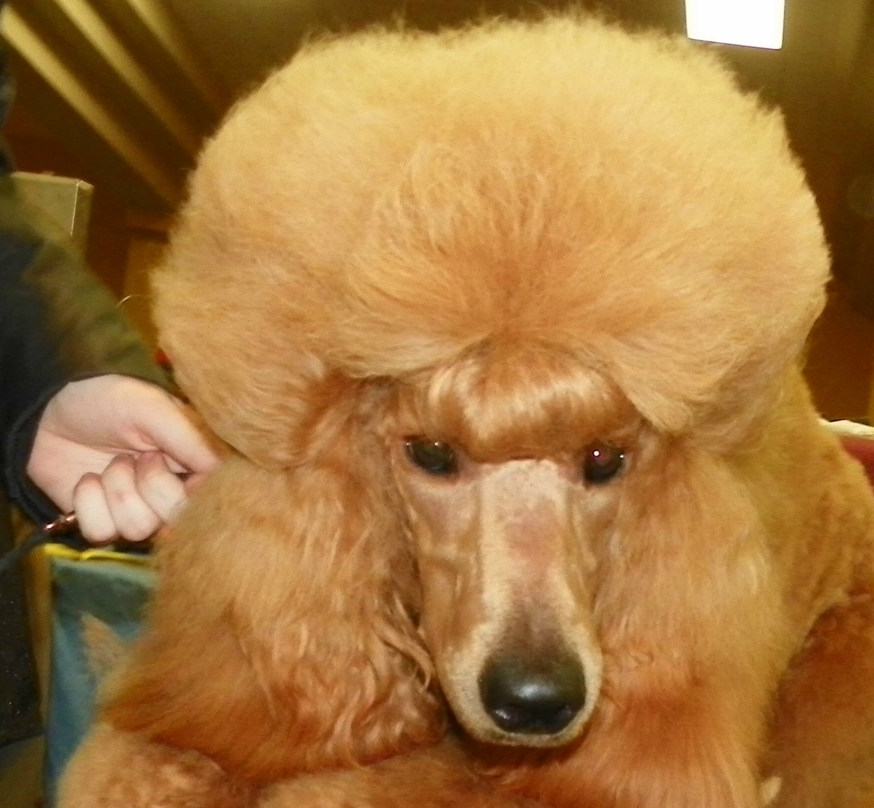 The Red Poodle Thread-101_5072.jpg