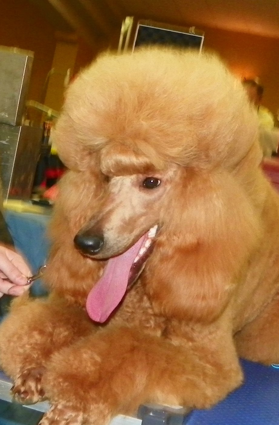 The Red Poodle Thread-101_5074.jpg
