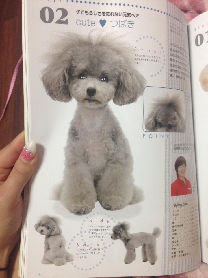 Poodle Styles Biyo Geka Photo Style