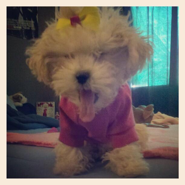 My Baby, Duchess-156408_10151254137829776_915992866_n.jpg