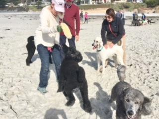 Poodle Day Oct 1 in Carmel--you're invited!-1pdfris.jpg