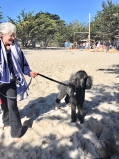 Poodle Day Oct 1 in Carmel--you're invited!-1pdjas.jpg