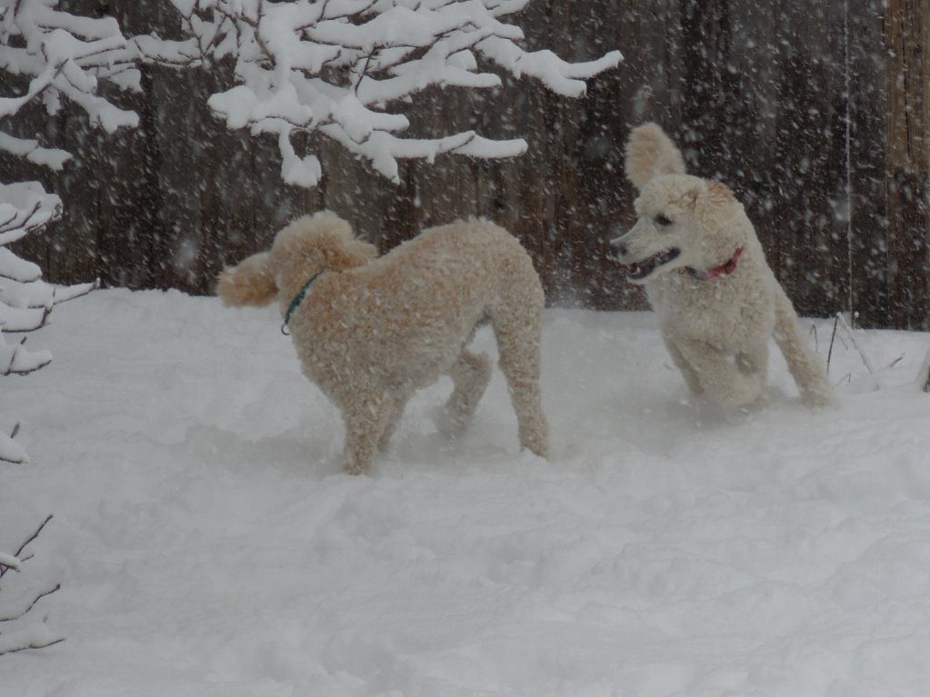 Bob and Sam in the snow-2015-3-5-1-1024x768-.jpg