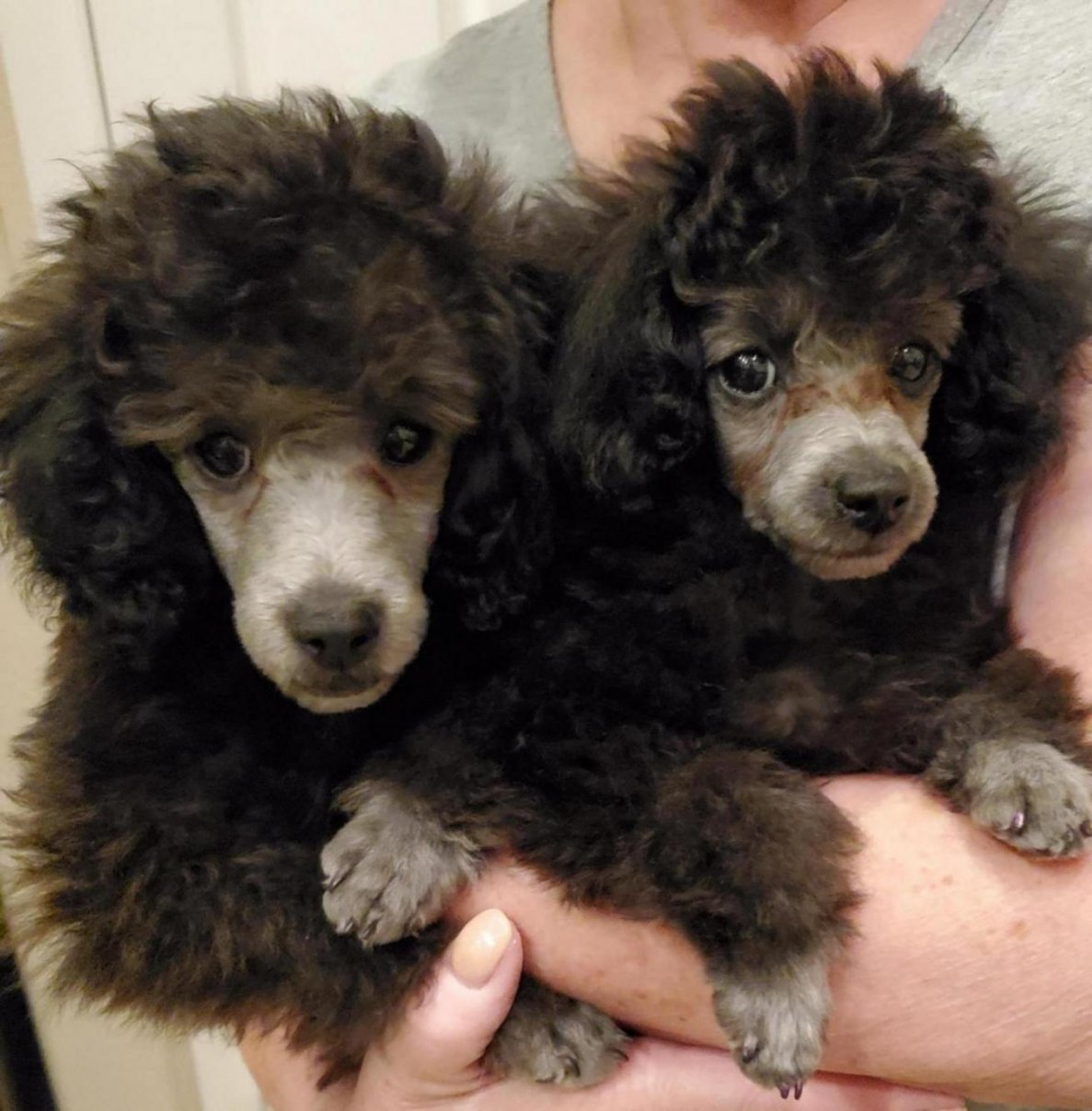Lily and Loki 10wks-20191014_205249_1571113359366.jpg