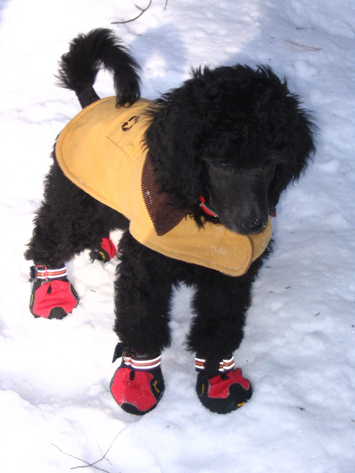 I Love These Shoes Poodle Forum Standard Poodle Toy