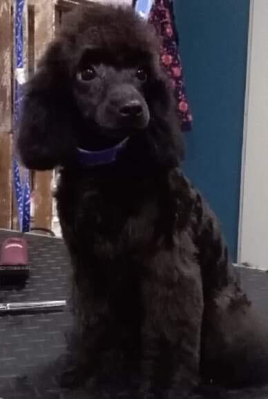 Zaira got a new haircut!😄-26870fa6-077a-4f0b-972e-a914cea3ff84_1570697140588.jpeg