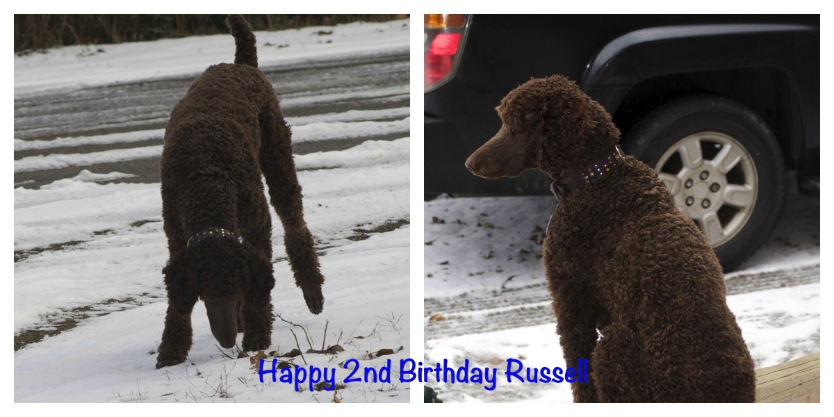 Happy 2nd Birthday Russell!-2nd-birthday-russell.jpg