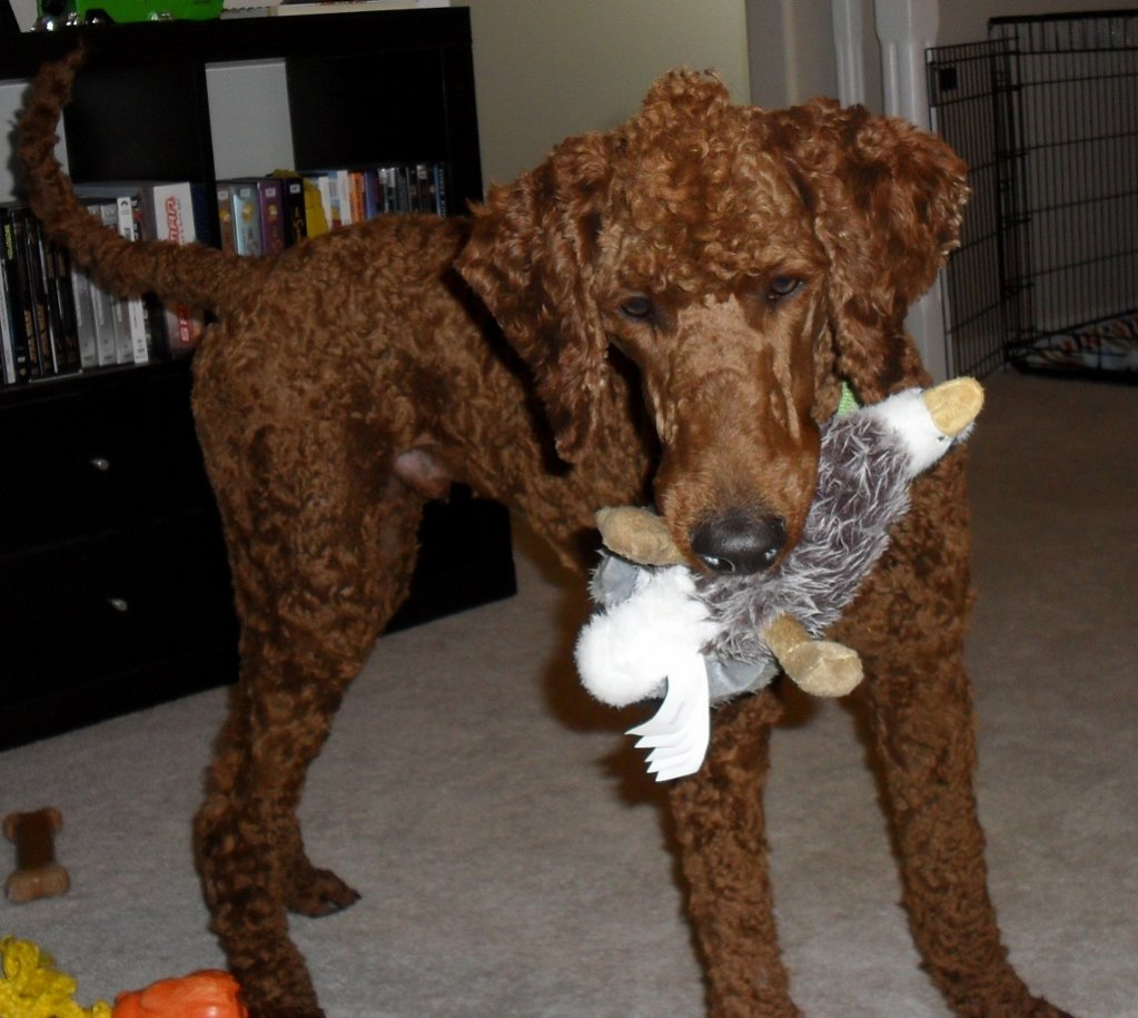 Tail docking?-3-ralph-july-2012.jpg