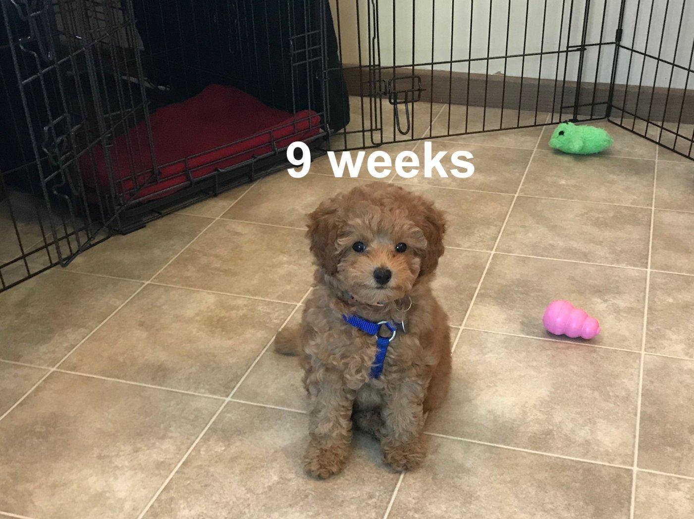 52 weeks of Lacey Rose-341ca1a3-779c-4da7-8aa7-e65e0e409516.jpg