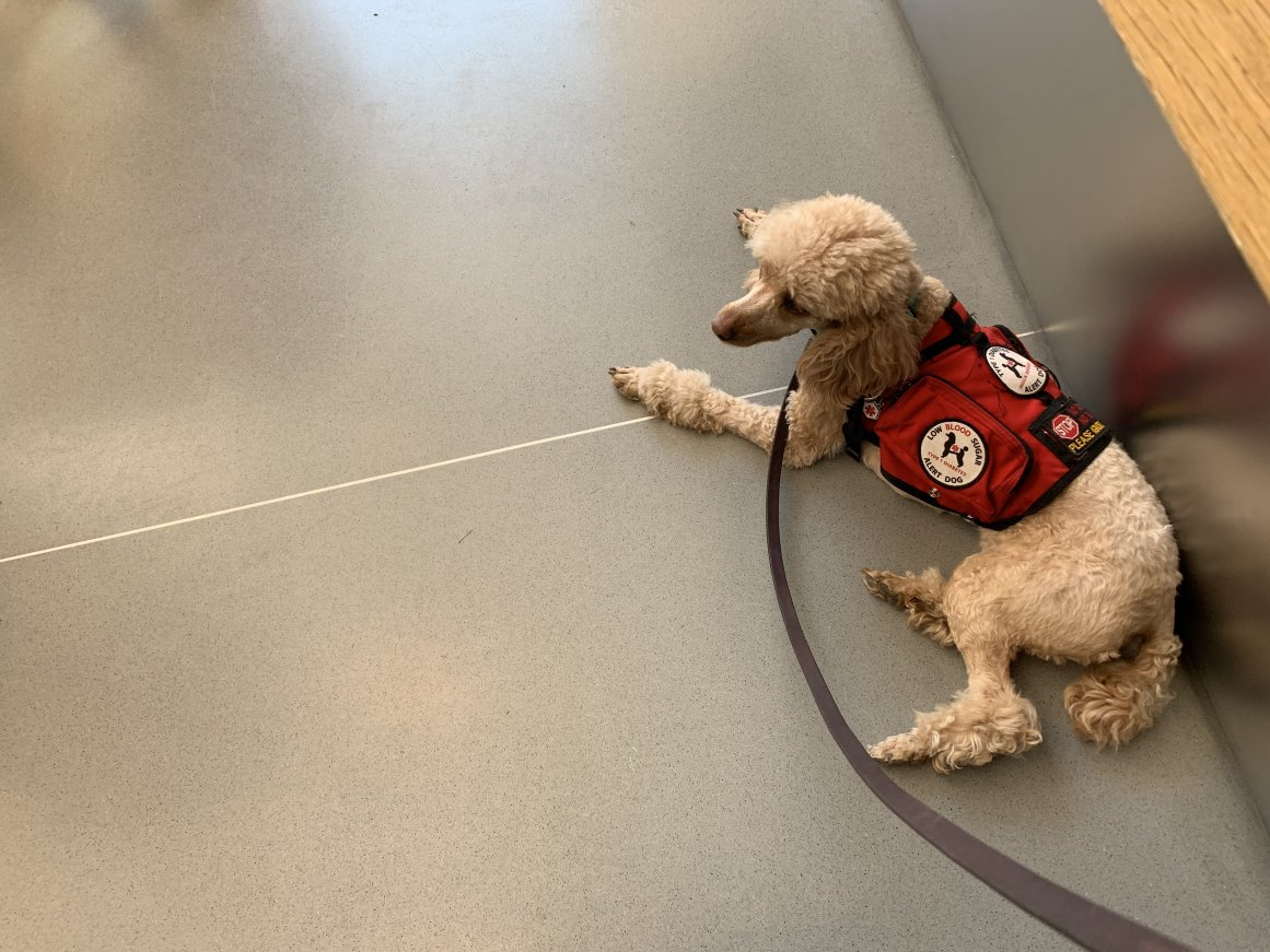Diabetes Alert Dog Training Update-3729fa16-9f3e-46b2-91b0-5031658f1846_1_201_a.jpg
