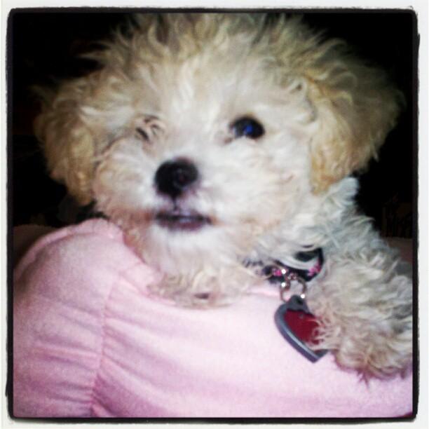 My Baby, Duchess-545342_10151245832419776_1243851779_n.jpg