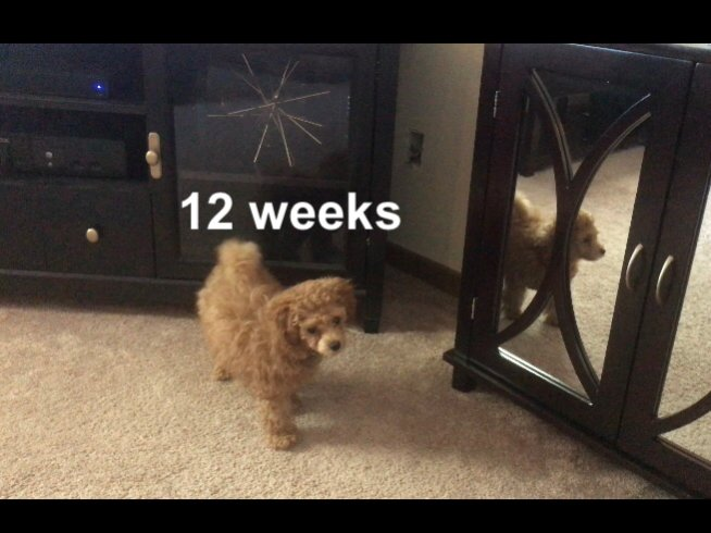 52 weeks of Lacey Rose-6874bbf5-8b38-4074-a4b5-7097db48f152.jpg