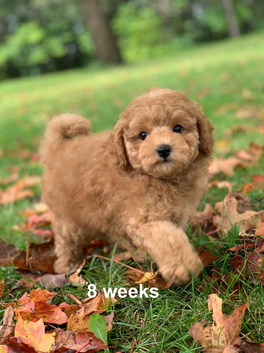52 weeks of Lacey Rose-9f5ac6fb-5577-429d-96f6-c5e59c47ed94.jpg