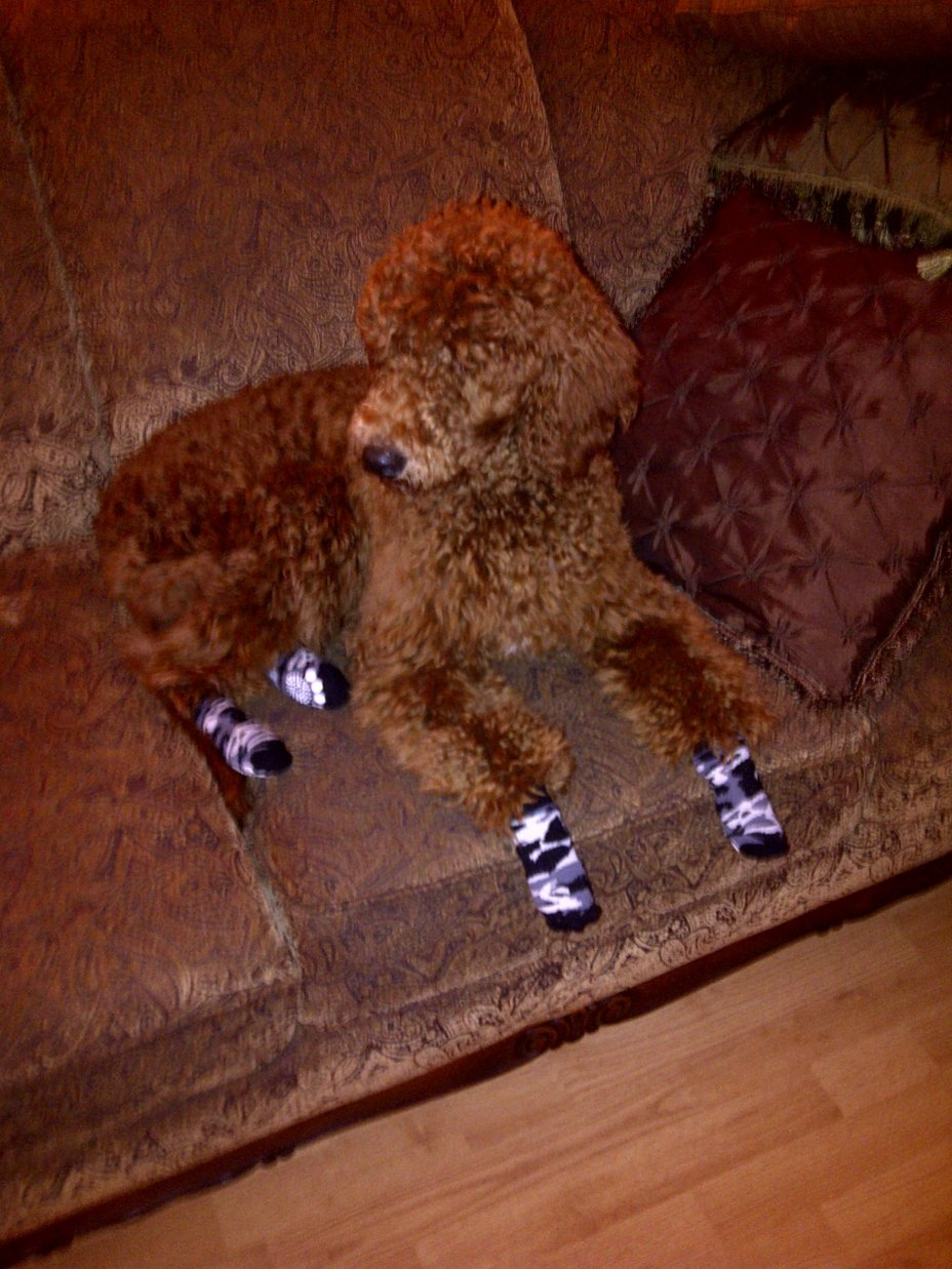 Mister Babykins Jasper-experiment-socks.jpg