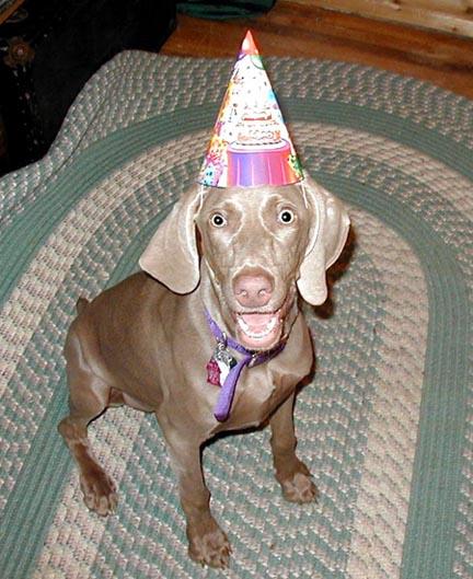 Goodbye April-april-party-dog.jpg