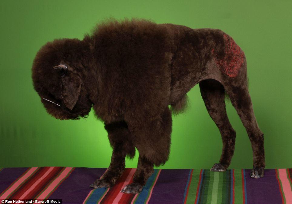 Dog Grooming Saskatoon
