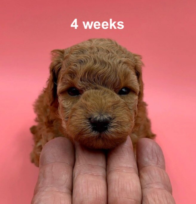 52 weeks of Lacey Rose-b2f8df6f-ddfb-437a-8123-cb0b8a8971ad.jpg