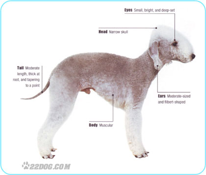 My Win Picture From Groom Kennel Expo Poodle Forum Standard