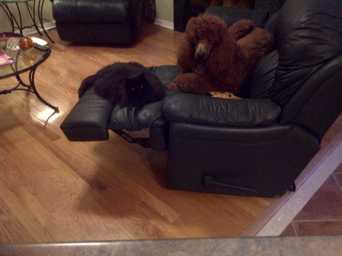 When the dog doesn't fit on the Ottoman-bella-finnegan-jan-2011-2-.jpg