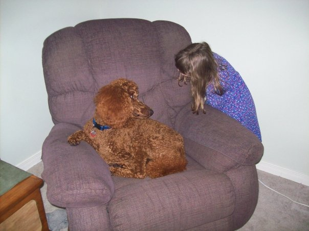 Non-Fading Red Standard Poodles?  fact or fiction?-betty-fourteen-months-old.jpg