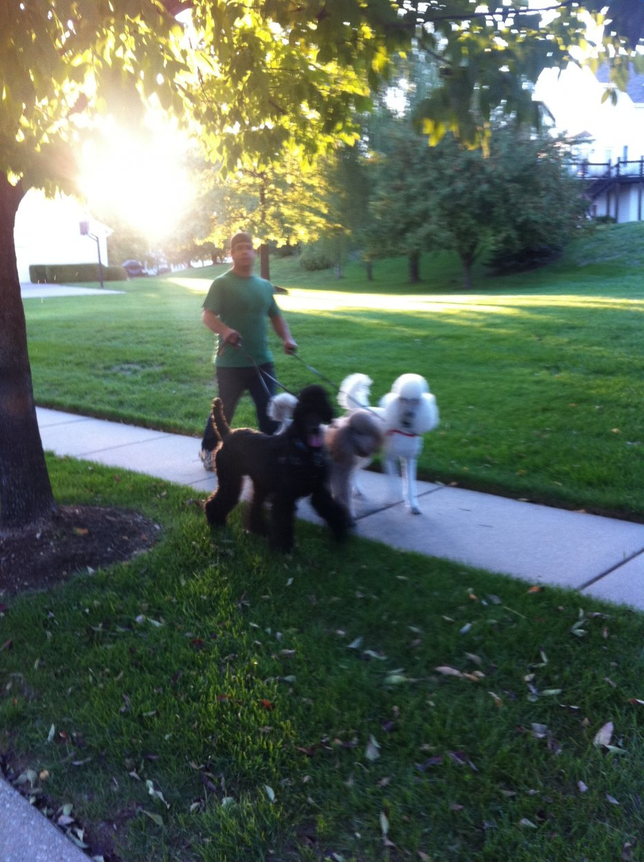 Photos that make you smile :)-bobby-walking-dogs.jpg