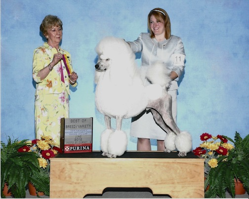 English Saddle Cut and Dog Shows-cc.jpg
