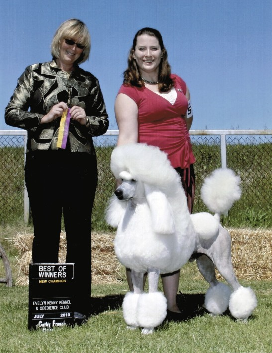 The White Poodle Thread-champion.jpg
