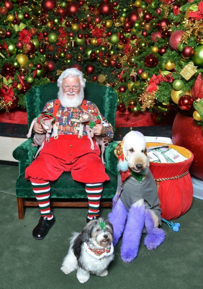 Christmas Photo-christmas.jpg