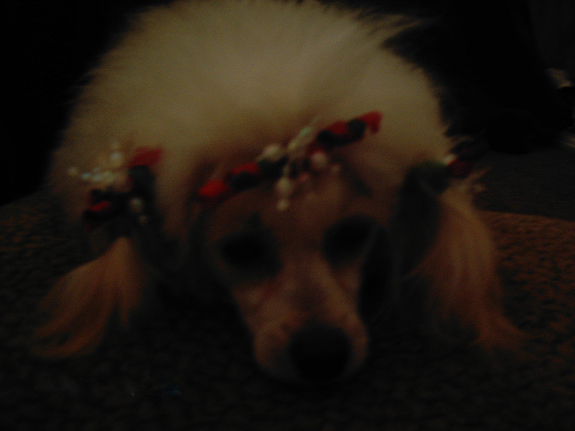Christmas Photo-dcfc0382.jpg
