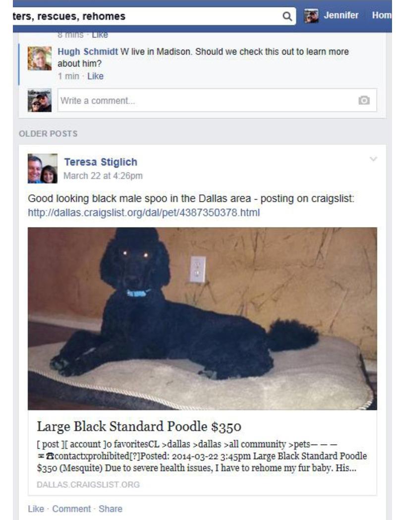 Craigslist Posting - Standar Poodle Milwaukee - Poodle Forum