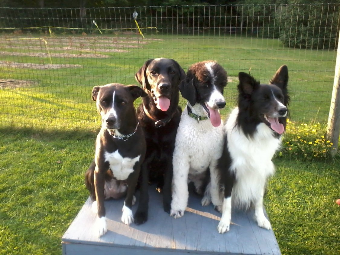 Poodle/Whippet Connection-dogs-074.jpg