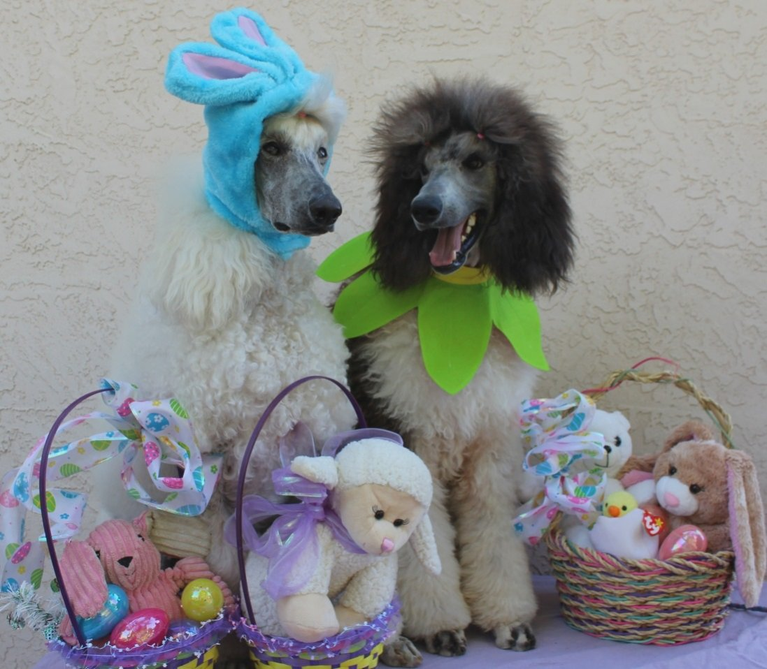 Click image for larger version  Name:Easter.2015.008.jpg Views:18 Size:154.6 KB ID:447309