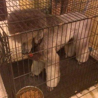 The Silver Poodle Thread-fallen-silver-12-31-12-2.jpg