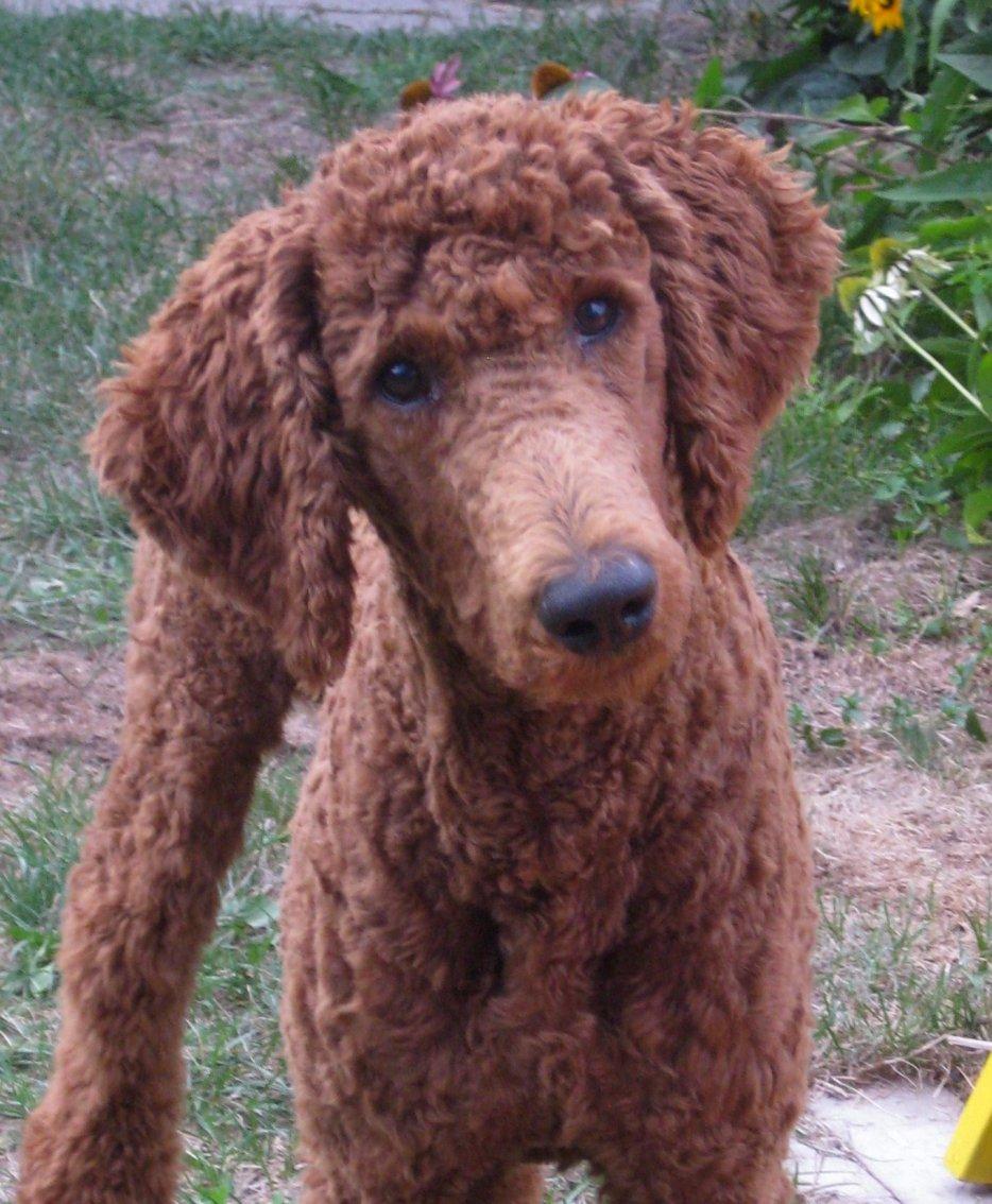 Liza Lou Dog Grooming