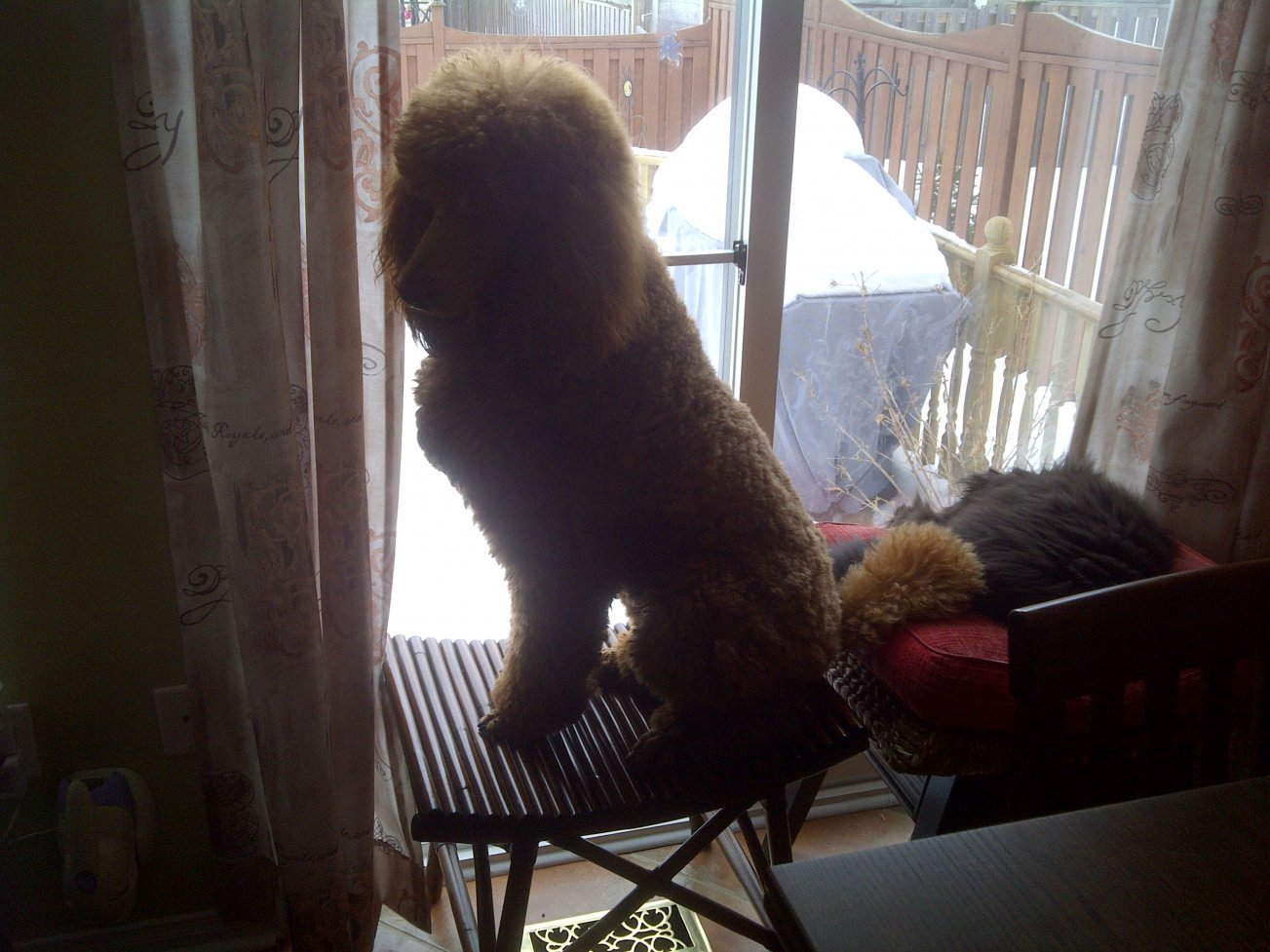 When the dog doesn't fit on the Ottoman-finnegan-feb-2011-1-.jpg
