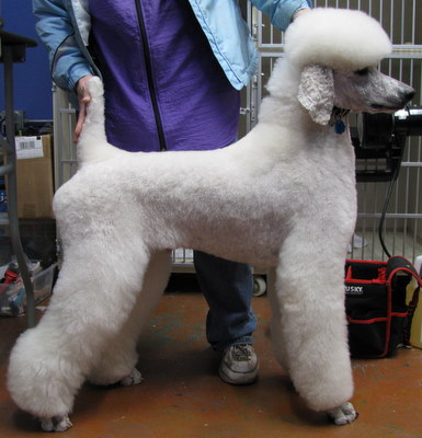 Poodle Cuts / Pictures of different poodle cuts-germantrim2.jpg