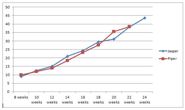 Standard Poodle Sizes Chart Hobitfullring