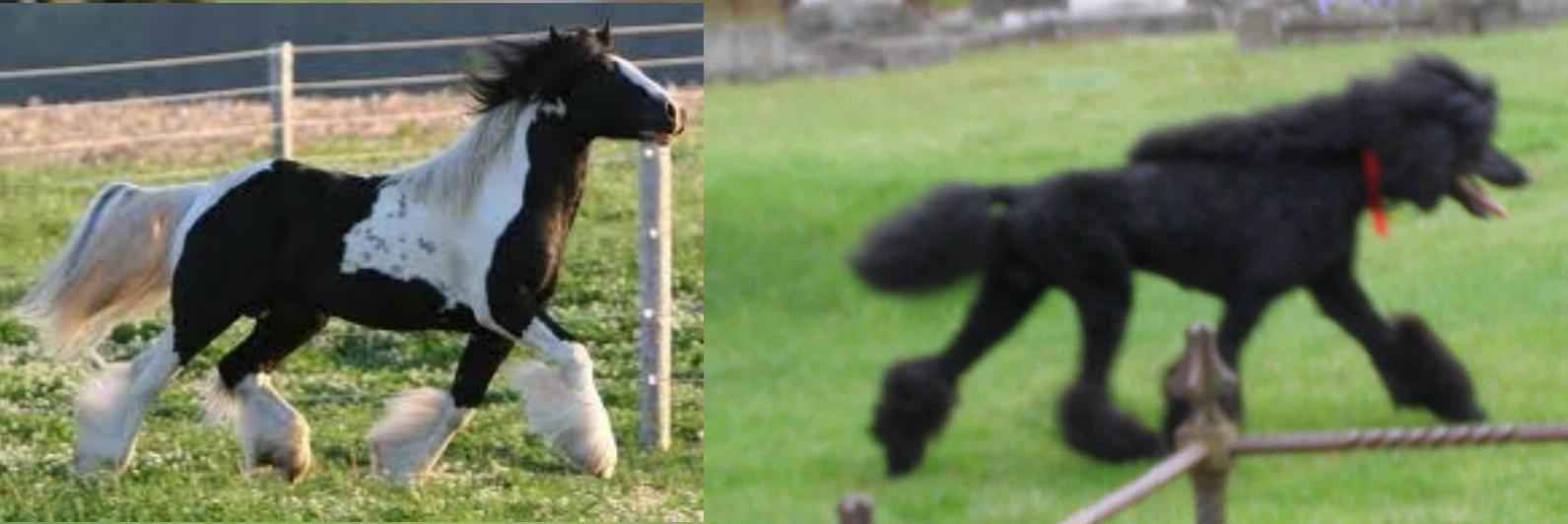 12 Freakishly Long Manes and Tails | HORSE NATION