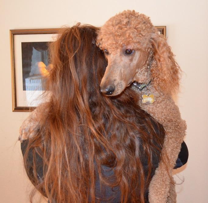 """Resultado de imagen de Poodle and owner cuddling"""""""