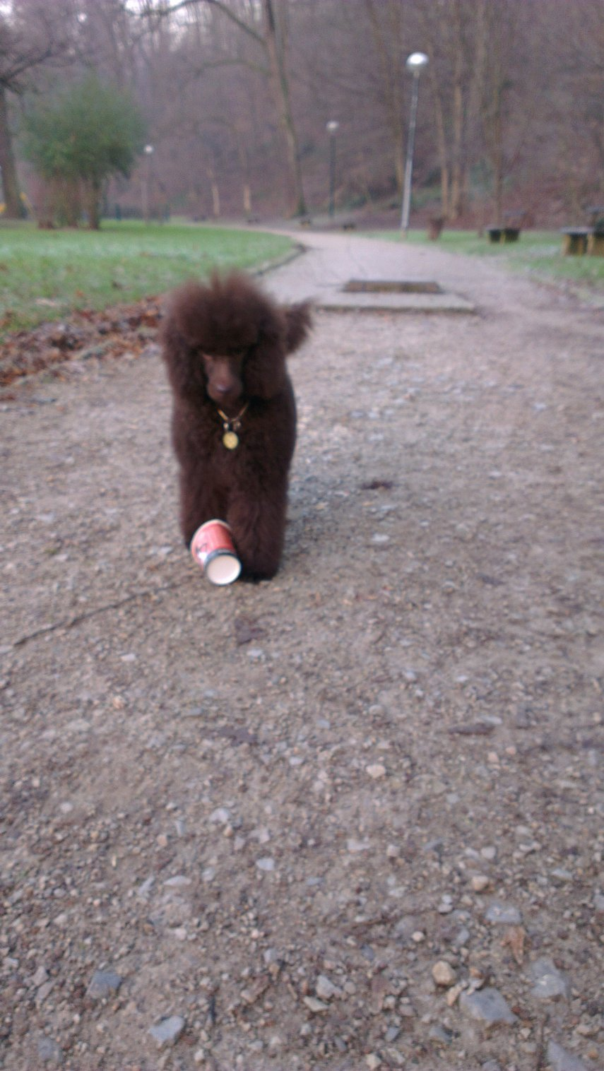 The Brown Poodle Thread-imag0050_burst002.jpg