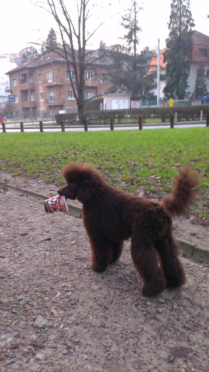 The Brown Poodle Thread-imag0051.jpg