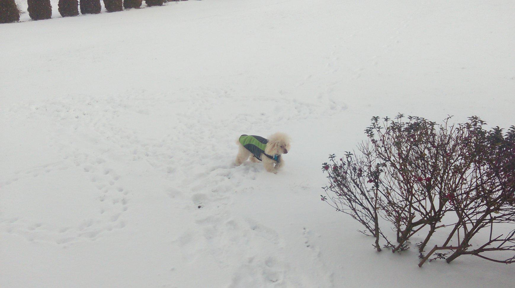 Bob and Sam in the snow-imag0497.jpg