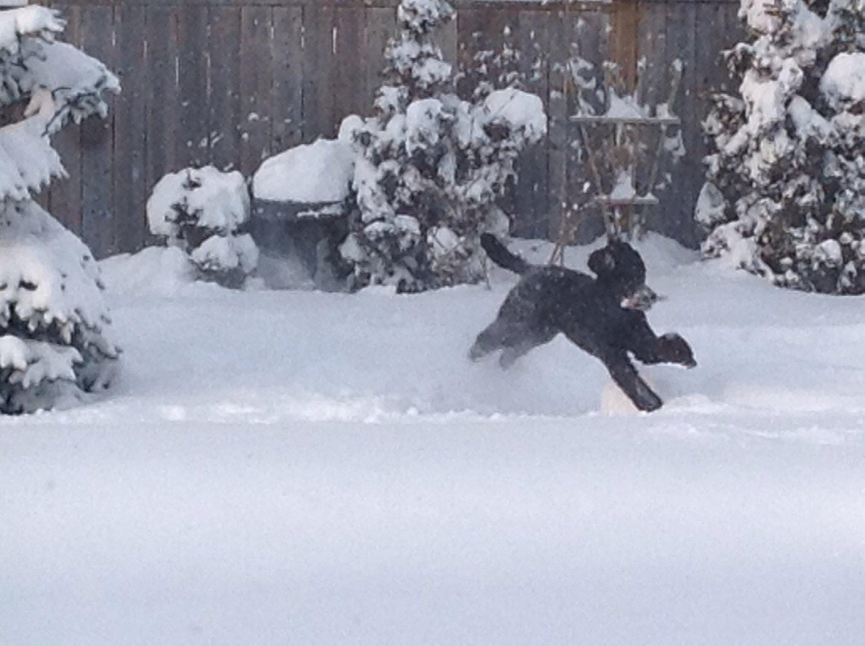 Winter storm!-image.jpg