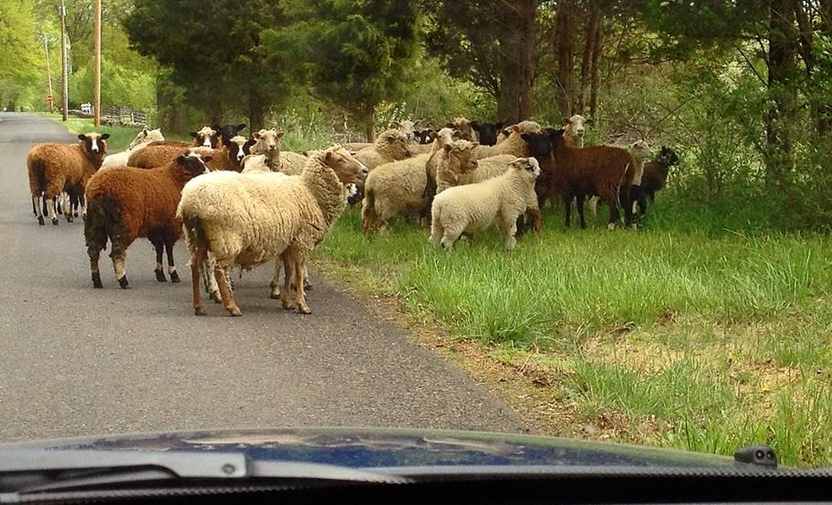 Spoo Herding Cattle-image00040.jpg