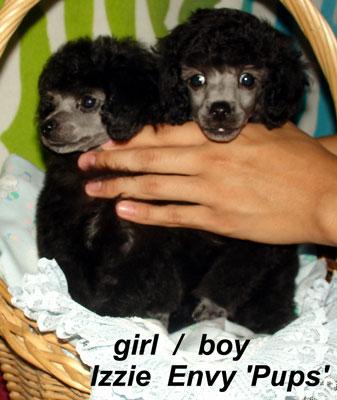 Lily and Loki 10wks-image001_1570604397133.jpg